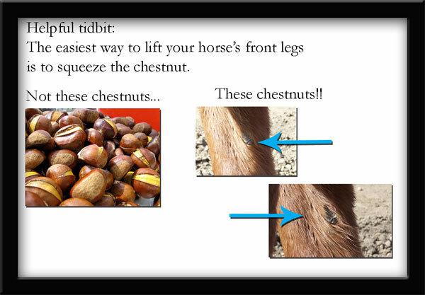 Chestnutsweb_1