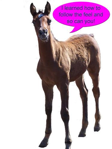 Camel_horseweb